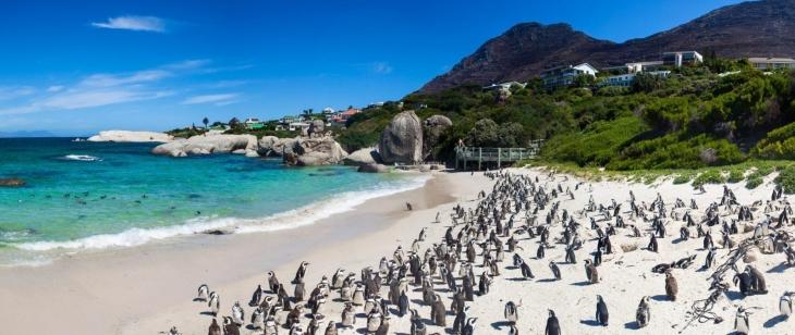 Rengarenk Cape Town Turu